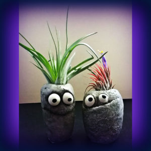 Air Plants and Planters
