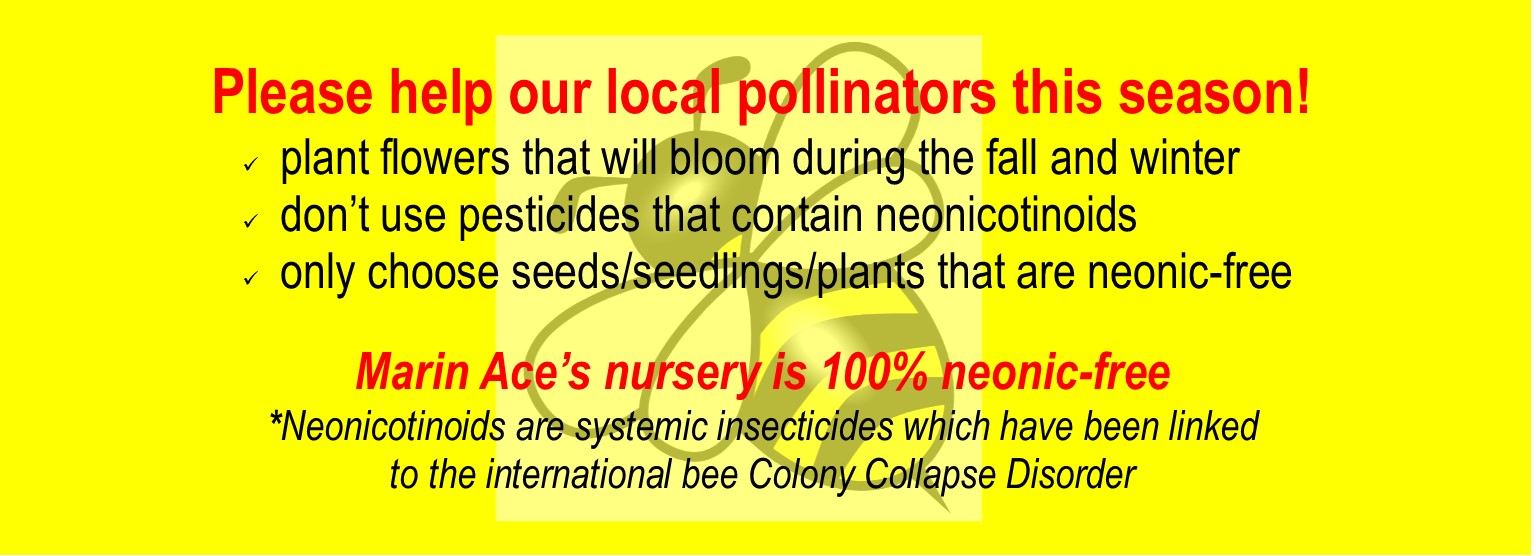 Plant now for pollinators this winter
