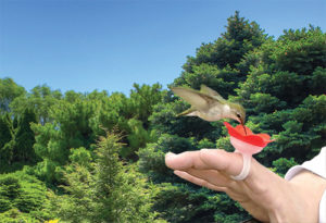 Human hummingbird feeder? No fooling!