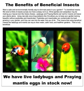 the benefits of beneficial insects
