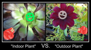 indoor vs outdoor plants