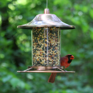 Seed feeder