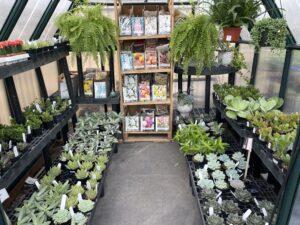 Greenhouse Succulents